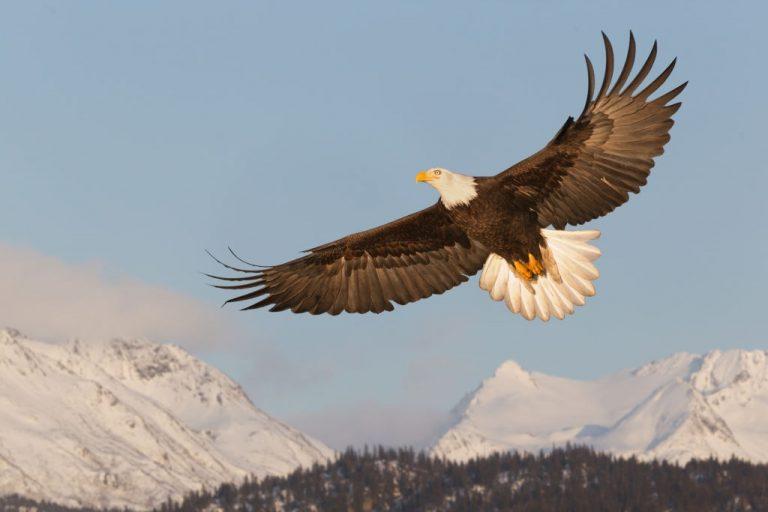 Sonhar com Águia