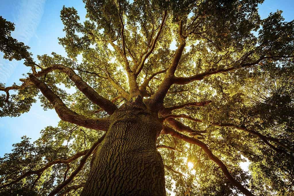 Qu'est-ce que cela signifie de rêver d'un arbre ? 1