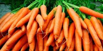sonhar com cenoura