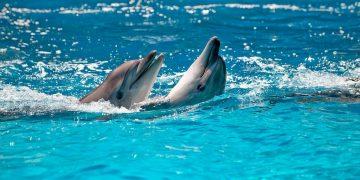Sonhar com Golfinho