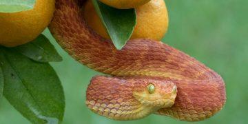 Serpent Rouge - La Signification Et Le Symbolisme Des Rêves 81