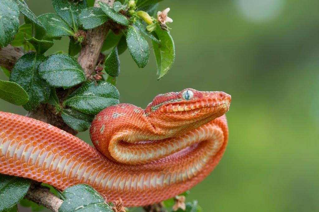 Serpent Rouge - La Signification Et Le Symbolisme Des Rêves 2